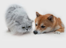 Собака и кошка Стоковая Фотография