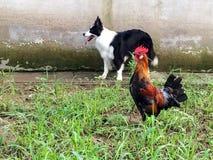 Собака и кран стоковое фото rf
