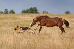 Собака и лошадь Стоковые Изображения RF