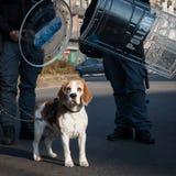 Собака и полиция протестующего в милане, Италии Стоковые Изображения