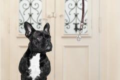Собака и предприниматель с поводком стоковые изображения rf