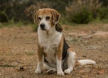 Собака и сельская местность Стоковая Фотография