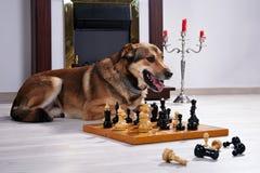 Собака и шахмат против камина. Стоковые Фото