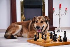 Собака и шахмат против камина Стоковые Фотографии RF