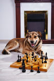 Собака и шахмат против камина Стоковое фото RF