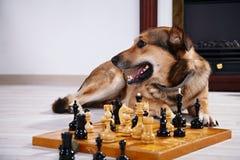Собака и шахмат против камина. Стоковые Изображения