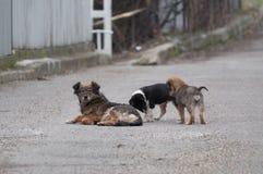 Собака и щенята мамы в улице стоковые изображения rf