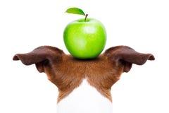 Собака и яблоко Стоковая Фотография RF