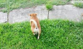 Собака идя в траву стоковая фотография