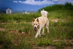Собака идя к камере Стоковое фото RF