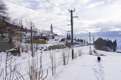 Собака идя через снег наряду с железной дорогой Стоковое Фото