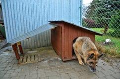 Собака и doghouse Стоковые Изображения