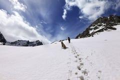Собака и hikers в горе снега на дне солнца Стоковые Фотографии RF