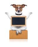 Собака йоги Стоковые Изображения