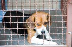 собака клетки Стоковое Фото