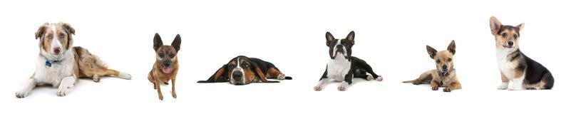 собака коллажа стоковое фото rf