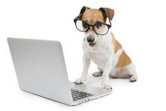 Собака компьютера Стоковое фото RF