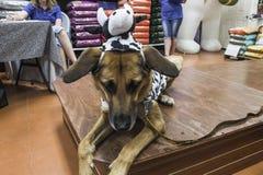 Собака коровы Стоковая Фотография