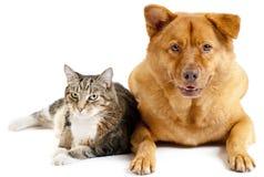 собака кота совместно стоковые изображения
