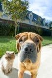 собака кота Стоковое Изображение