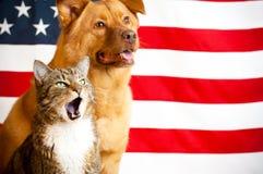 собака кота flag мы Стоковые Изображения