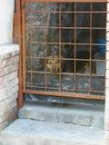 Собака которая не сдерживает стоковая фотография
