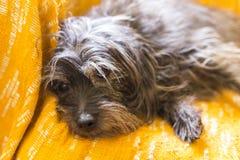 Собака которая остается на оранжевой предпосылке Стоковые Фото