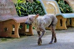 Собака которое больно кожные заболевания стоковое фото