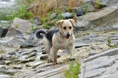 Собака, который нужно освежить в воде во время горячего лета Стоковое Изображение RF