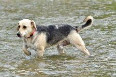 Собака, который нужно освежить в воде во время горячего лета Стоковая Фотография RF