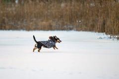 Собака, который побежали с зимой одежд Стоковое Изображение RF