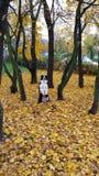 Собака Коллиы границы осени Стоковая Фотография RF