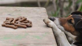 Собака крадя еду стоковое изображение