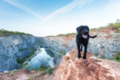 Собака красивого остолопа черная на утесе горы стоковые изображения rf