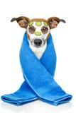 собака красотки Стоковые Изображения RF