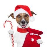 Собака Кристмас стоковое изображение rf