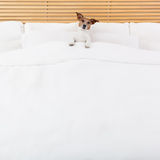 собака кровати Стоковая Фотография