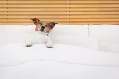 собака кровати Стоковая Фотография RF