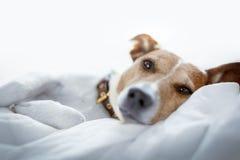 собака кровати стоковое изображение rf