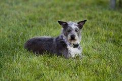 Собака кладя снаружи Стоковое фото RF