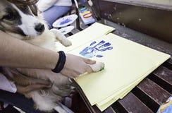Собака кладя след ноги Стоковая Фотография RF