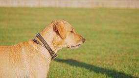 Собака лаяя и махать кабель акции видеоматериалы