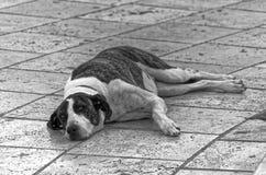 Собака лежа вниз на улице стоковое фото rf