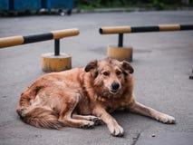 Собака лежа на асфальте стоковая фотография rf