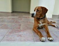 собака лежа на плиточном поле Стоковое Изображение