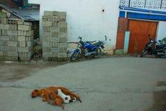 Собака лежит на дороге и подает щенята Стоковая Фотография