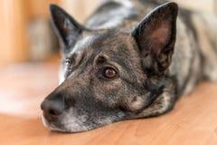 Собака лежит на поле и ожиданиях для владельца стоковые изображения