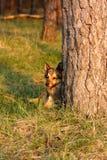собака лежит около вала Стоковое Фото