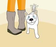 собака малая Стоковое фото RF