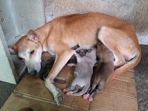 Собака мамы нянча ее щенят стоковая фотография rf